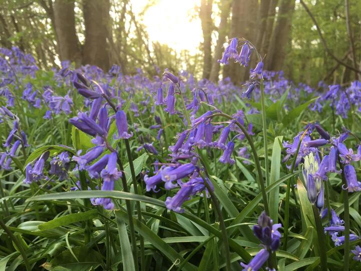 Befriending and bluebells bring hope